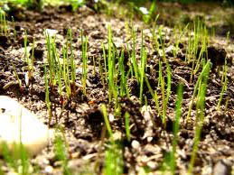 How Long Before You See Results To Expedite Germination Photo Of New Gr Sprouts